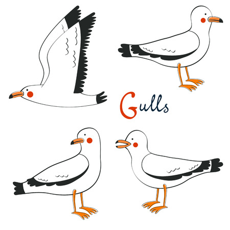 oceanside: Hand drawn seagulls collection. Illustration