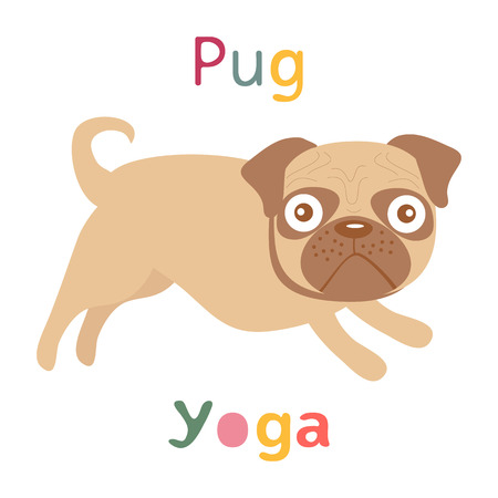 pug dog: An illustration of pug doing yoga
