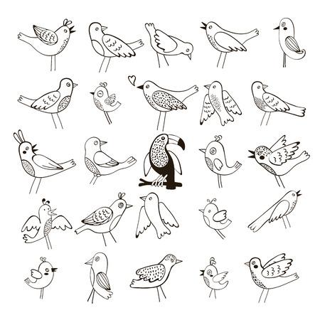 oiseau dessin: Collection mignonne de drôles d'oiseaux. illustration vectorielle