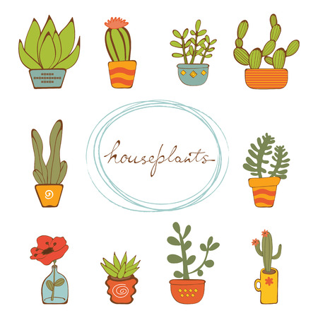 terrarium: Beautiful set of hand drawn houseplants. vector illustration