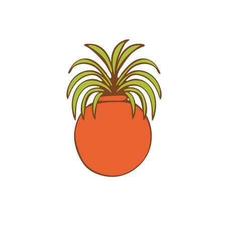 house plant: Beautiful  house plant  in round vase.