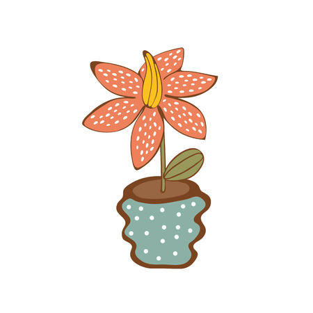 house plant: Beautiful  house plant  in vase.