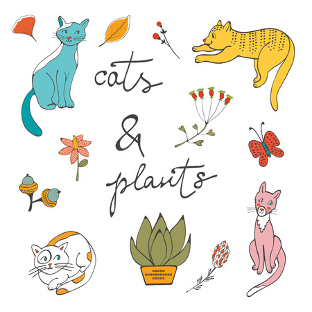 wiskers: Illustration of cats plants flowers and twigs in vector format Illustration
