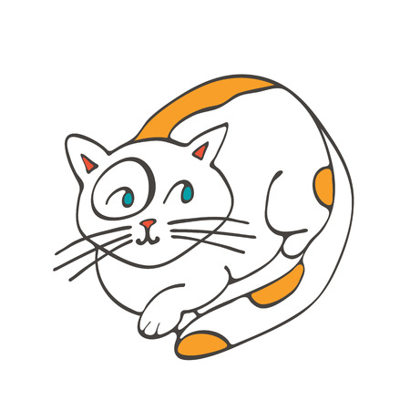 domestic cat: Hand drawn illustration of cute domestic cat in vector format