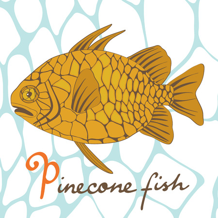 fish illustration: A colorful illustration of exotic pinecone fish in vector format