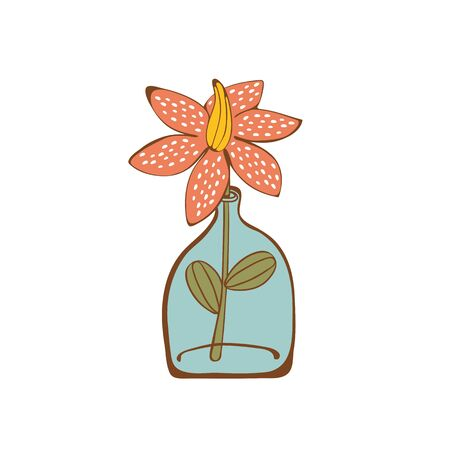 glass bottle: Beautiful  house plant  in  glass vase. vector illustration