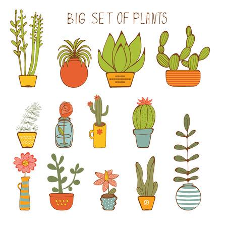 Beautiful set of hand drawn houseplants. vector illustration