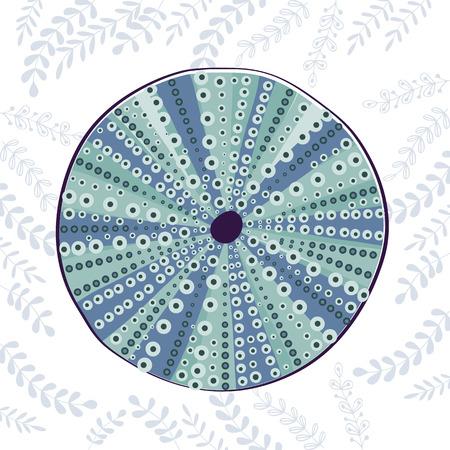 sea urchin: Sea urchin colorful illustration.In vectro format