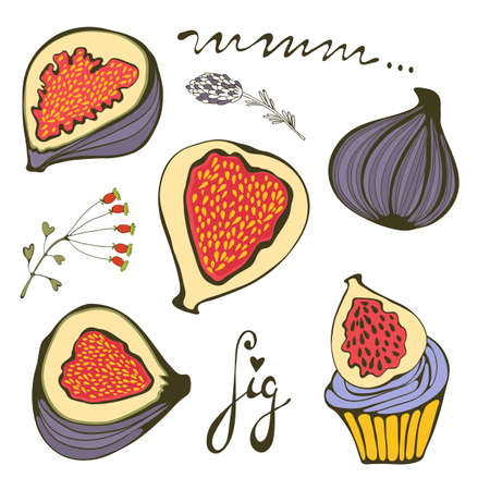 bio food: Hand drawn figs. Bio food illustration in vector format