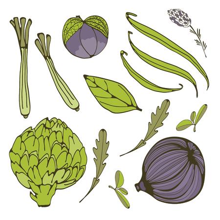 ejotes: Colorful set of fresh handdrawn vegetables. Illustration in vector format