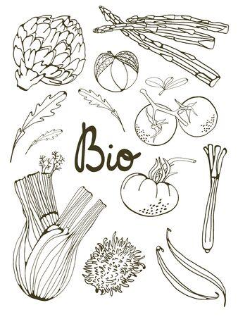 ejotes: Esquema conjunto de vegetales dibujados a mano frescas. Ilustración en formato vectorial