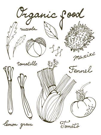 lemon grass: Outline set of fresh hand drawn vegetables. Illustration in vector format
