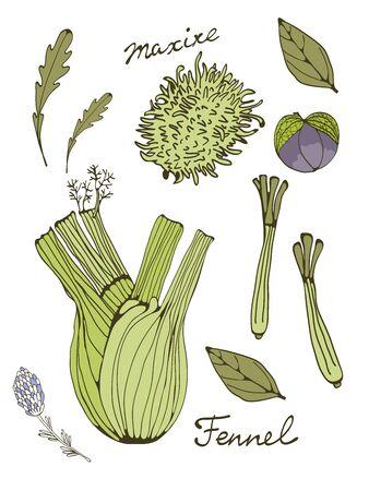 lemon grass: Colorful set of fresh hand drawn vegetables. Illustration in vector format Illustration