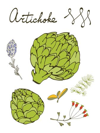 ejotes: conjunto de colores de alcachofas frescas dibujados a mano. Ilustración en formato vectorial