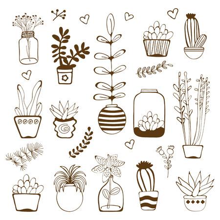 house plants: Big hand drawn set of house plants. Vector illustration