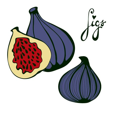passion  ecology: Hand drawn figs. Eco food. Vector illustration Illustration