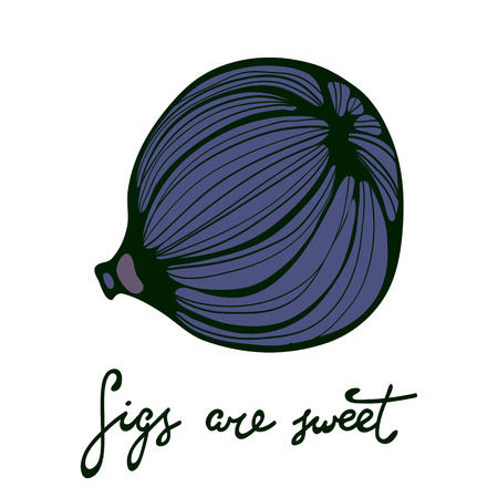 passion ecology: Hand drawn figs. Eco food. Illustration in vector format Illustration