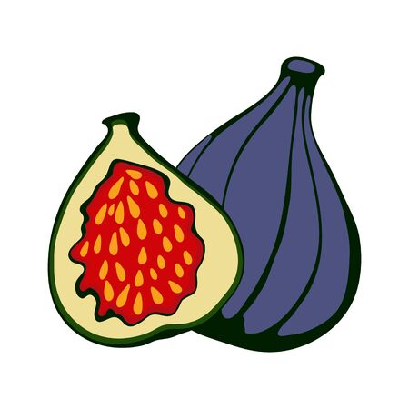 passion  ecology: Hand drawn figs. Eco food. Illustration in vector format.