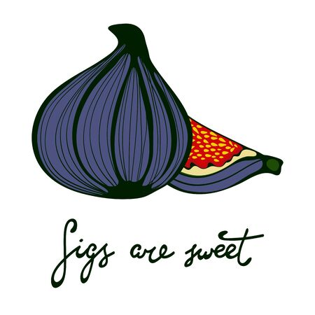 pulp: Figs are sweet. Hand drawn figs. Eco food. Vector illustration