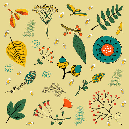 twigs: Autumn foliage set with twigs, flowers and leaves. vector illustration