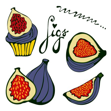 passion ecology: Hand drawn figs set. Eco food. Illustration in vector format.