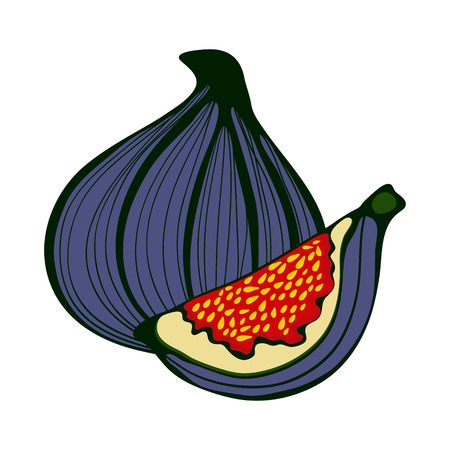 fig leaf: Hand drawn figs. Eco food. Illustration in vector format.