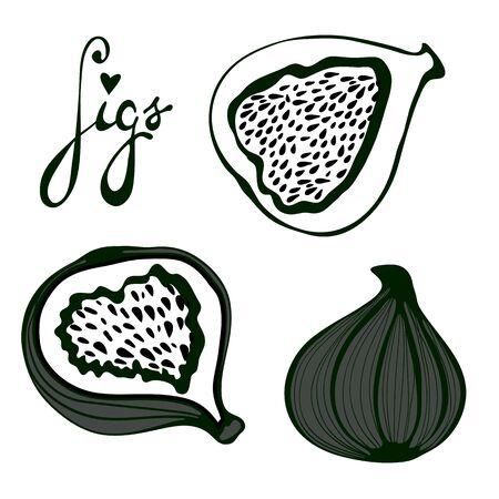 fig leaf: Hand drawn figs set. Eco food. Illustration in vector format.
