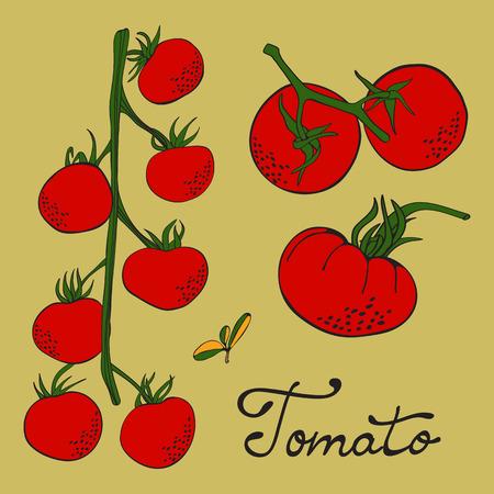 Colorful hand drawn set of tomatoes Ilustracja