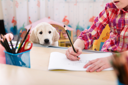 golden retriever puppy: Cute girl and puppy drawing together at kids room