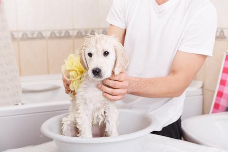 chiot de golden retriever est de prendre une douche à la maison