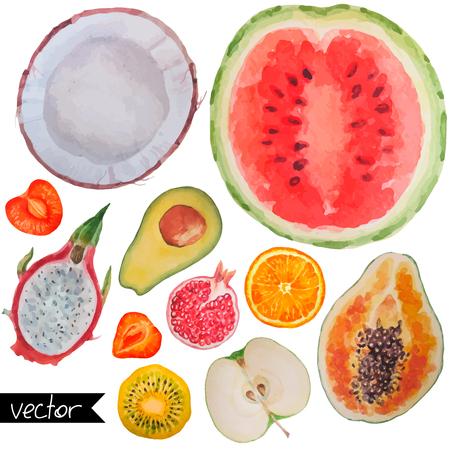 Colección conjunto de frutas bayas y frutas exóticas maduras fresca de cerca objetos de la muestra aislada en el fondo blanco. Pintura de acuarela