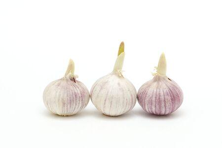 garlics: Three garlics on a white background
