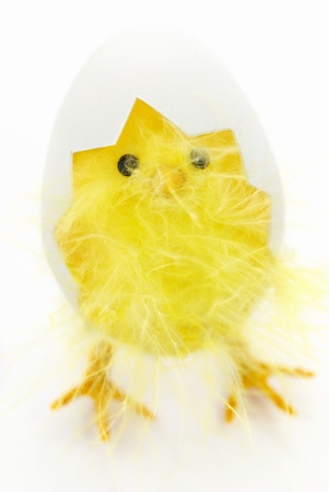 Chicken coming out of a white egg. Easter decoration isolated on white background Stock Photo - 9711270