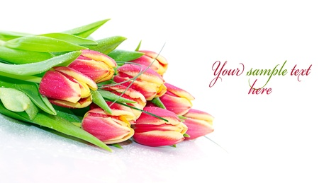 Bouquet of fresh tulips with drops  with sample text  photo