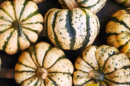 Striped pumpkins background, white and green Stock Photo - 17983791