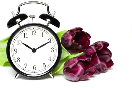 Spring time  Old fashion alarm clock with violet tulips photo
