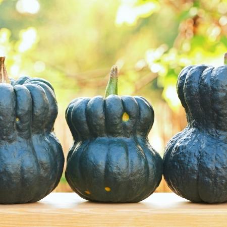 Three fresh green pumpkins in the garden Stock Photo - 17983720