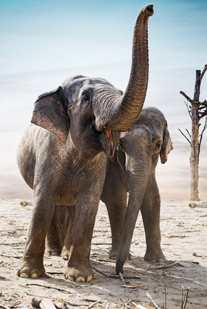Indian elephants family stand outdoor  photo