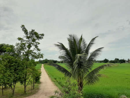 View of rural agriculture that have an alley 版權商用圖片