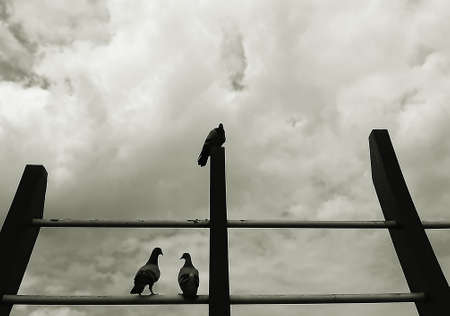 The silhouette of pigeons catching on railing in grey tone color. Standard-Bild