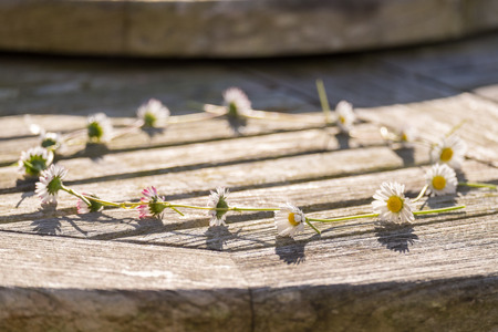 daises: Daisy Chain on a wooden table, selective focus on foreground daisy Stock Photo
