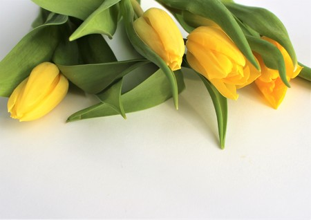 Yellow tulips on a light background - spring bouquet
