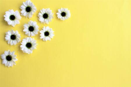 White chrysanthemum flowers on yellow Banque d'images