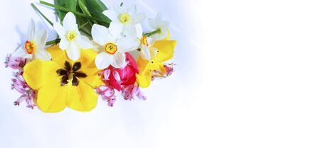 Spring bouquet of tulips and daffodils on a white background. Delicate flower arrangement. Background for cards, greetings, invitations.
