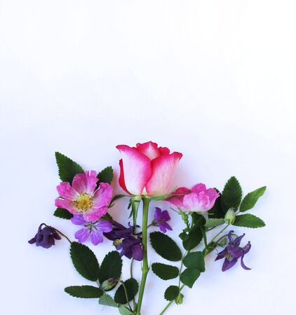 A delicate bouquet with a rose in pastel colors on a white background. Background for greetings, invitations, and postcards.