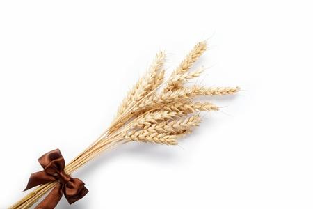 小麥耳朵孤立在白色背景。