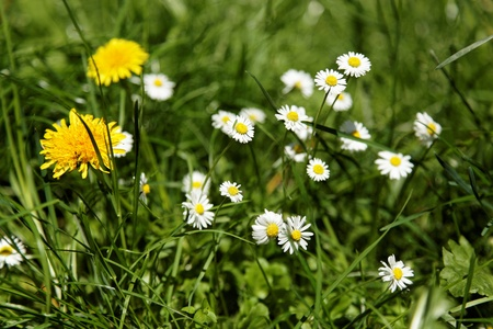 Wildflowers in the green grass Stock Photo - 14843153