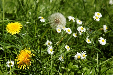 Wildflowers in the green grass  Stock Photo - 14843158