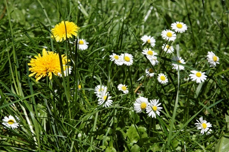 Wildflowers in the green grass. Stock Photo - 14861461