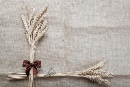小麥在畫布上的耳朵。